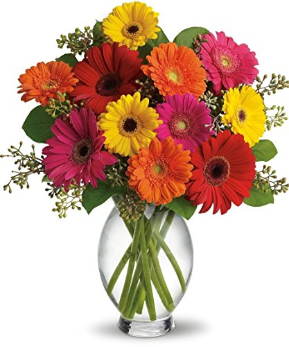 Allen's Flowers & Plants - Great Gerbera Daisies - Deluxe - Fresh and Hand Delivered - San Diego County County Daisy