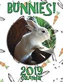 Bunnies! 2019 Calendar