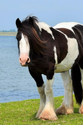 (Irish Cob Horse by the Water Journal: Take Notes, Write Down Memories in this 150 Page Lined)