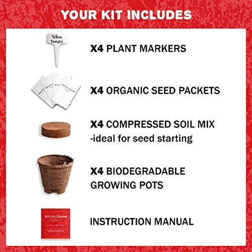 Grow 4 Types of Tomatoes from Seed - Indoor Germination Kit with 4 Packets of Non-GMO Organic Seeds - Sweet Red Tomato, Cherry Tomatoes, Yellow Pear Tomato, Green Zebra Tomato, Soil, Pots & Guide.