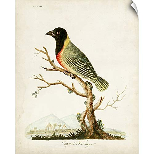 CANVAS ON DEMAND Capital Tanager Wall Peel Art Print, 38