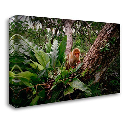 (Short-Tailed Spotted Cuscus Young Near Kivaumai Village, Papua New Guinea 34x24 Gallery Wrapped Stretched Canvas Art by Ellis, Gerry)
