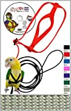 The AVIATOR Pet Bird Harness and Leash: Large Silver