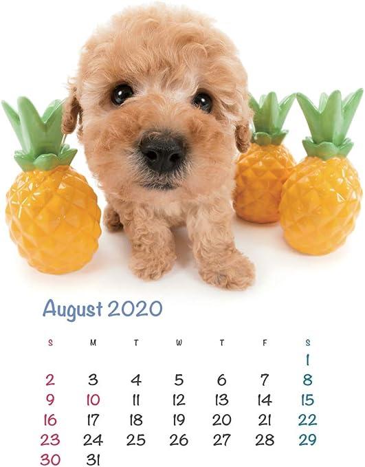 The Dog Desk Calendar 2020 Poodle