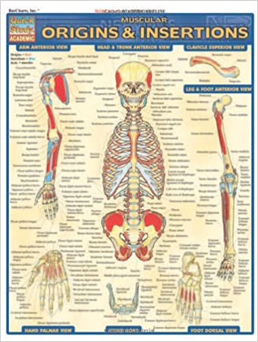 Muscular Origins & Insertions (Quick Study Academic): Inc. BarCharts ...