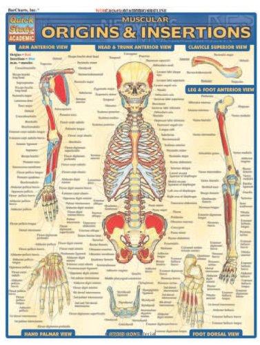 Muscular Origins & Insertions (Quick Study Academic)