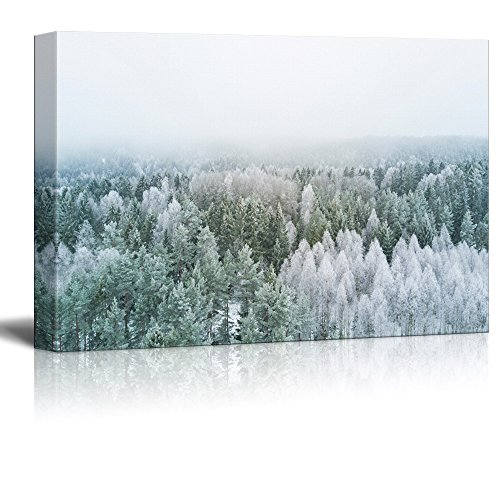 White Pine Tree Forest Covered with Snow and Frost Gallery