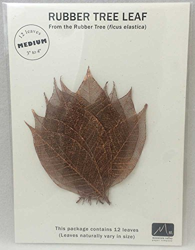 (COPPER MEDIUM RUBBER TREE LEAVES - Pack of 12 skeleton leaves)