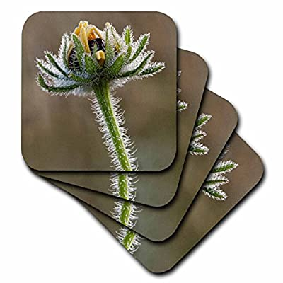 3dRose Danita Delimont - Flowers - Dew covered Black-eyed Susan, Oldham County, Kentucky - Coasters