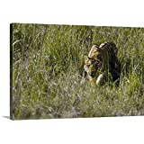 Canvas On Demand Premium Thick-Wrap Canvas Wall Art Print Entitled Bengal Tiger Panthera Tigris Tigris cub Walking in a Forest Bandhavgarh National Park Umaria District Madhya Pradesh India