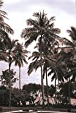 Coconut Grove, Candidasa , 36x24in. (paper)