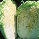 buy David's Garden Seeds Cabbage Chinese Minuet D2901 (Green) 200 Hybrid Seeds now, new 2018-2017 bestseller, review and Photo, best price $8.45
