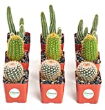 "Shop Succulents | Cool Cactus Collection of Live Succulent Plants, Hand Selected Variety Pack of Cacti | Collection of 9 in 2"" pots"