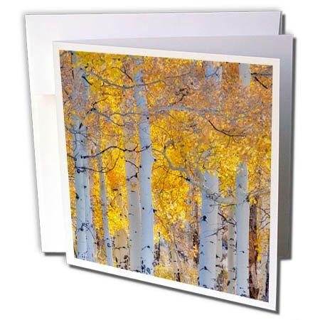 3dRose Danita Delimont - Travel - Aspen Glowing along Dallas Mountain Road, San Juan Mountains, Colorado - 6 Greeting Cards with envelopes (gc_278828_1)