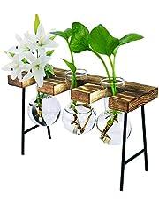Cute hydroponic Propogation Stations Desktop Air Planter Glass Planter Bulb Vase Stand Home Office Desk Decor