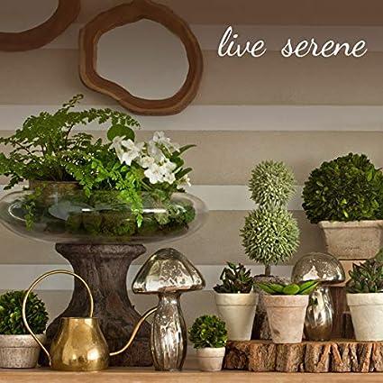 "Vintage Square Bottle Style 4 3//8/"" Tall by 2 5//8/"" Square Serene Spaces Living 6 Glass Bottle Bud Vases Elegant Vases"