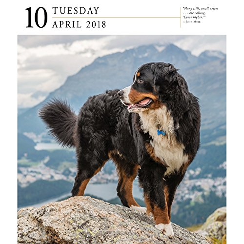 Dog 2018 Page-A-Day Gallery Calendar Photo #3
