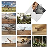 M1736BN Vanishing Wildlife: 10 Assorted Blank All-Occasion Note Cards Feature Ghosting Images of Endangered Animals, w/White Envelopes.