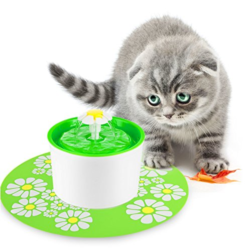 Cat Fountains Food Water Dishes What Cats Need