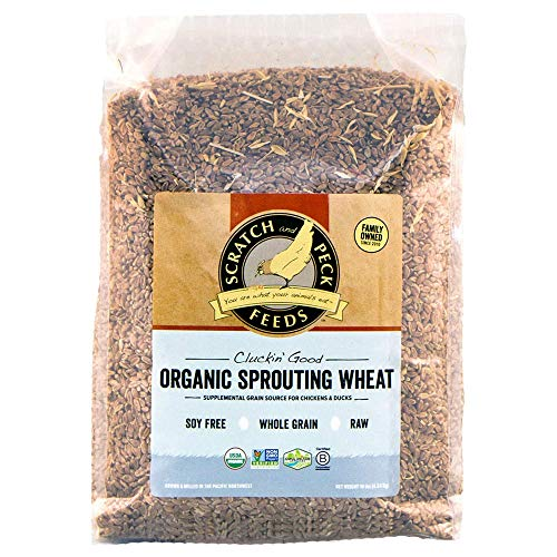Scratch and Peck Feeds - Cluckin' Good Organic Sprouting Wheat - Supplemental Grain Source - Soy Free, Whole Grain, Raw - 10-lbs