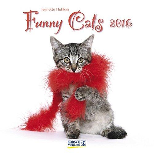 Funny Cats 2016: Broschürenkalender mit Ferienterminen