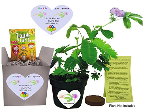 Fun Alternative to a RETIREMENT CARD. Say Happy Retirement - So Tickled To Share This Gift With You. - Grow the House Plant that Closes Its leaves and lowers ts branches when you TICKLE it! by TickleMe Plant