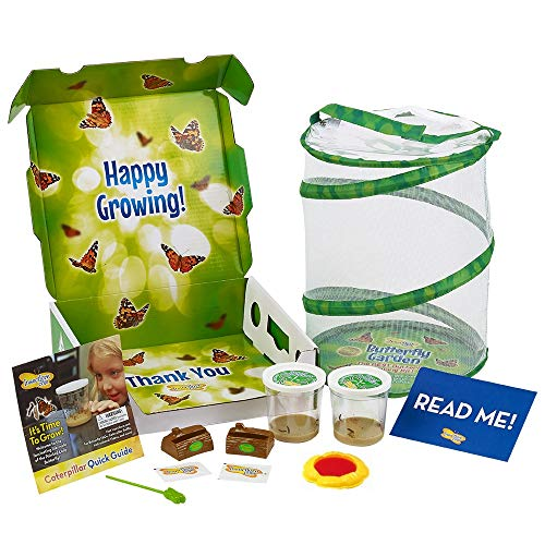 (Insect Lore Deluxe Butterfly Garden with 2 Live Cups of Caterpillars & Feeding)
