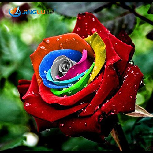 200-seeds-rare-holland-rainbow-rose-flower-lover-multi-color-plants-home-garden-rare-rainbow-rose-fl