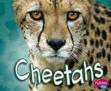 Cheetahs, Deborah Nuzzolo, 1429612444