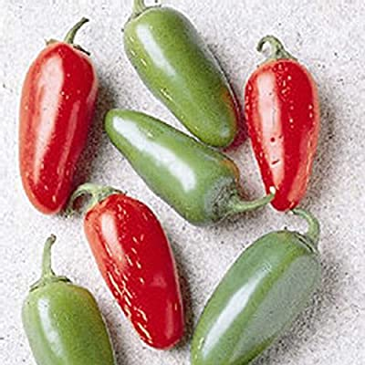 Early Jalapeno Hot Pepper Garden Seeds - Non-GMO, Heirloom Vegetable Gardening Seed