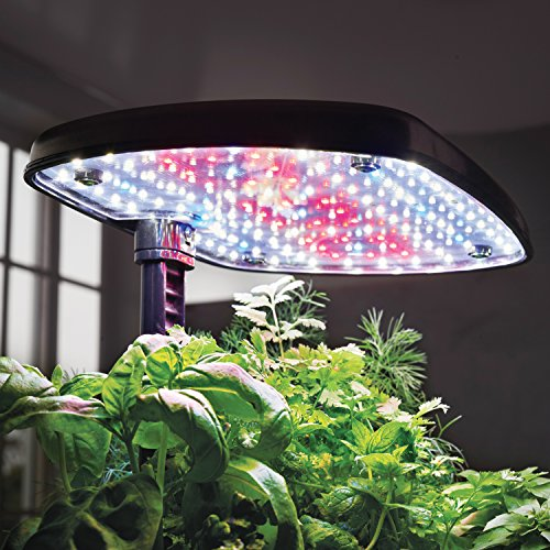 51dNn37K8 L - AeroGarden Harvest Touch with Gourmet Herb Seed Pod Kit, Stainless Steel