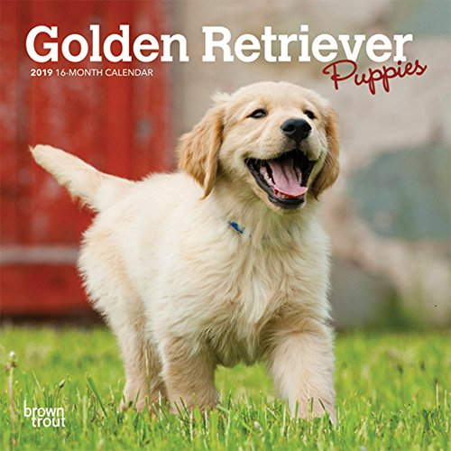 Golden Retriever Puppies 2019 7 x 7 Inch Monthly Mini Wall Calendar, Animals Dog Breeds Puppies (English, French and Spanish Edition)