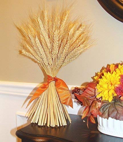 Elegant Holidays Handmade Natural Golden Wheat Sheaf, Welcome Guests with Halloween, Thanksgiving decoration, Indoor Home Accent Décor, Great for Autumn with Fall Foliage Colors