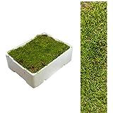 1 Caja Placa de Musgo aprox. 2,00 - 2,50 kg Colchón de musgo verde naturaleza