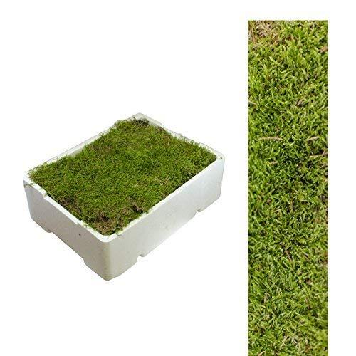 1 Caja Placa de Musgo aprox. 2,00 - 2,50 kg