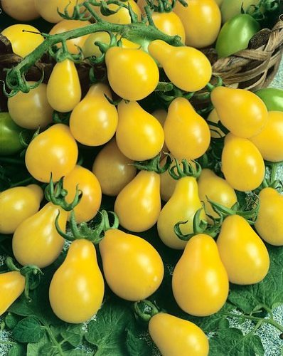 Yellow Pear Tomato Seeds - Lycopersicon Esculentum - 0.25 Grams - Approx 140 Gardening Seeds - Vegetable Garden Seed (Tomato Plants Pear)