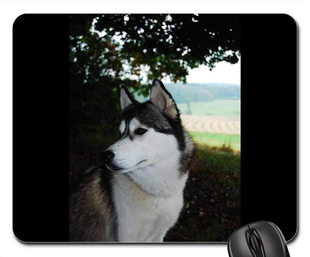 犬用マウスパッド 1123-002 300*250*3 mm B07L3BZ42B Fl27 220*180*3 mm 220*180*3 mm|Fl27