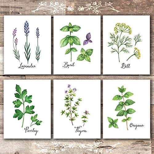 Amazon.com: Botanical Prints Kitchen Herbs Wall Art