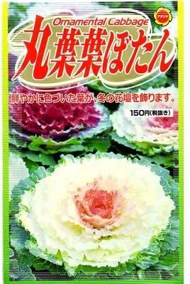 まるば葉牡丹 (848)