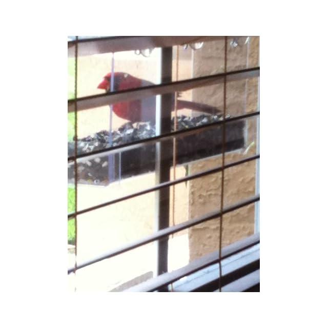 Duncraft 74201 Cardinal Classic Window Bird Feeder, 1 Quart  Wild Bird Feeders  Patio, Lawn & Garden