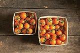 David's Garden Seeds Tomato Cherry Sun Gold SL7700 (Orange) 25 Non-GMO, Hybrid Seeds