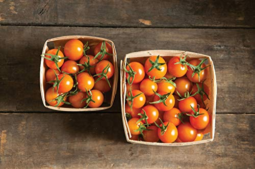 David's Garden Seeds Tomato Cherry Sun Gold SL7700 (Orange) 25 Non-GMO, Hybrid Seeds ()