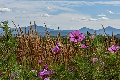 Amazon landscape pictures white mountains with flowers fine landscape pictures white mountains with flowers fine art photographs home decor pictures of mightylinksfo