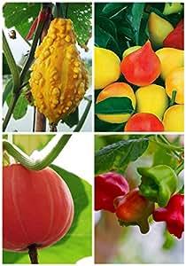 Orgánico de alta nutrición 4 tipos Semillas deliciosa fruta para jardín Planttin Bonsai dulce 2