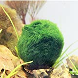 Marimo Moss Balls,Patgoal Live Marimo Plants Natural Toys for Fish Aquarium Plant (8 Pcs)