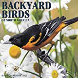 Backyard Birds 2020 Wall Calendar