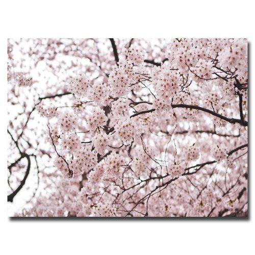 Cherry Blossoms by Ariane Moshayedi, 16x24-Inch Canvas Wall Art