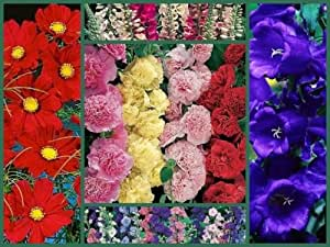"""OLD TIMEY SPECIAL - TALL VARIETIES"" - FLOWER SEEDS ~ 5 FULL SIZE PACKS SAVE!"