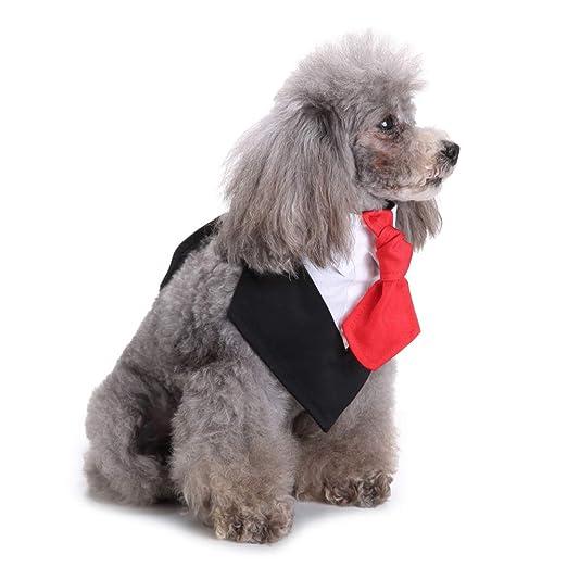 LPxdywlk Mascota Perro Cachorro Boda Fiesta Novio Esmoquin ...