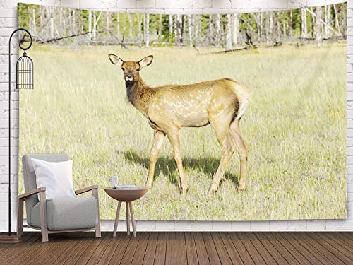 Jesmacti Art Tapestry, 60x50 Inch Wall Tapestry Dormitory Rrenovation Deer National Park West Canada British Banff Columbia Bedside Camping Adventure Decorative Cloth Hanging Art Tapestry -